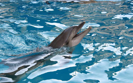 delfines, дельфины, пол, fotos, дельфин, murals, картинках, следы, alta,
