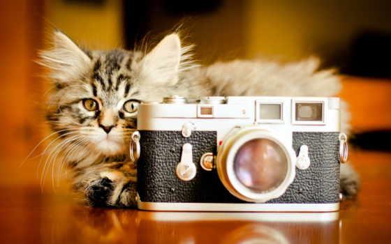 Котенок за фотоаппаратом