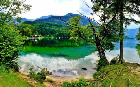 озеро, slovenia, берегу, берег, горы, леса, bohinj, озера, зеленые, растут,