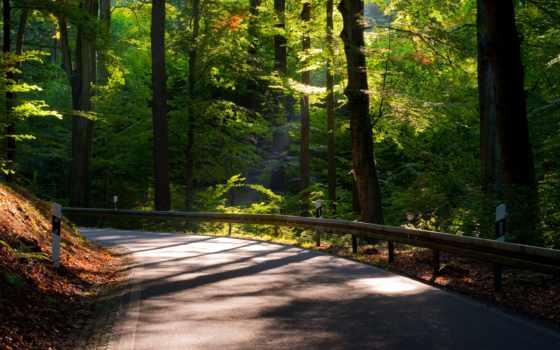 дорога, дерево, природа, листва, trees, highway, дороги, route,