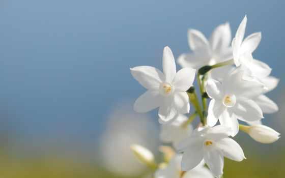 небо, поле, монитора, весна, cvety, голубое, лепестки,