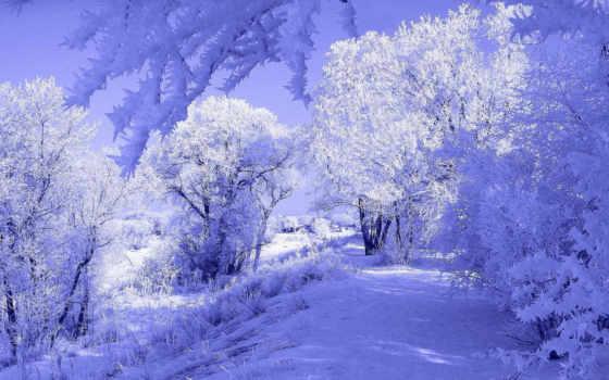 winter, zima, лесу, природа,