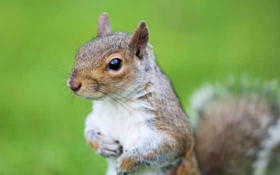 zhivotnye, экран, зайцы, грызуны, ушан, zoom, протектор, морда, белки, дерево,