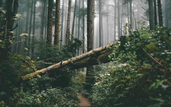 dead, дерево, fore, рост, природа, mist, leaf, растение, зелёный, смерть