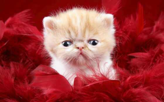 game, кот, persian, pazlyi, little, car, infox, play, котенок, красное