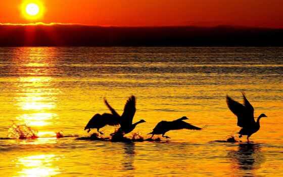 закат, water, лебедь, sun, природа, bila, facebook, волна, стихи, море, kilogramm