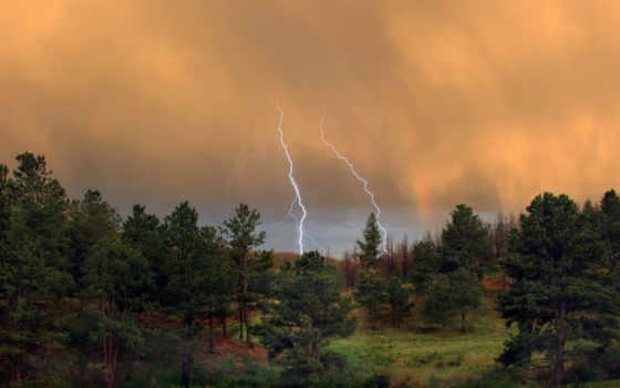 лес, молния