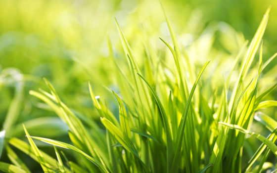 зелёный, summer, весна