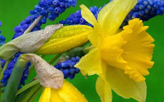 цветы, весенние, цветник, первоцветы,
