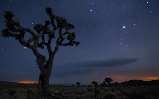 дерево, пустыня, навин, park, national, mexico, california, tears,