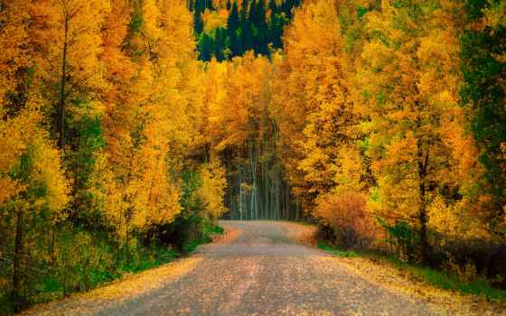 aspen, trees, пасть, природа, widescreen, high, yellow, wide,