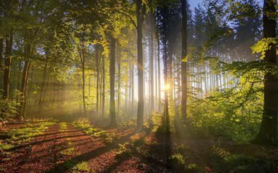 лес, природа, коллекция, пользователя, яndex, красивые, осень, высокого, summer,