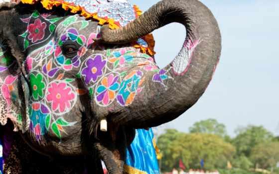 индии, india, туры, день, goa, независимости, индию, изображение, товаров, jaipur,