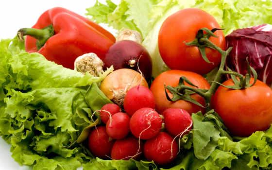 растительный, молодой, цена, company, whatsapp, djuice, ukraine, sunberry, сервис, товар
