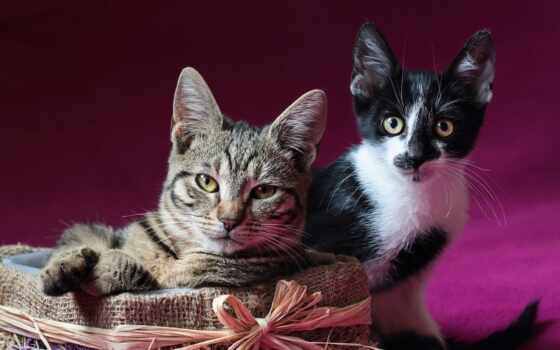 коты, котенок, кот, striped, серый, animal, steam, анимация