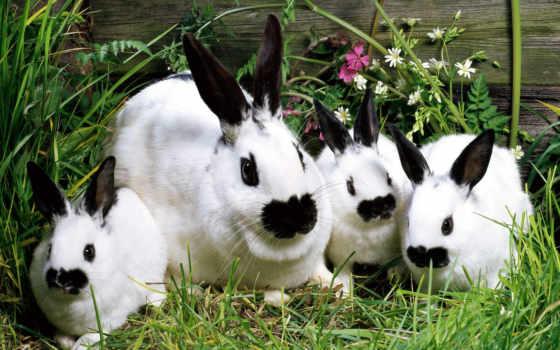 rabbits, сборник