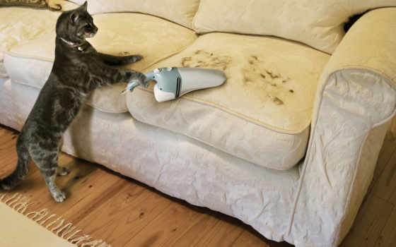 картинка, вид, диван, cat, шерсть, funny, необычно, прикол, ad, пылесос,