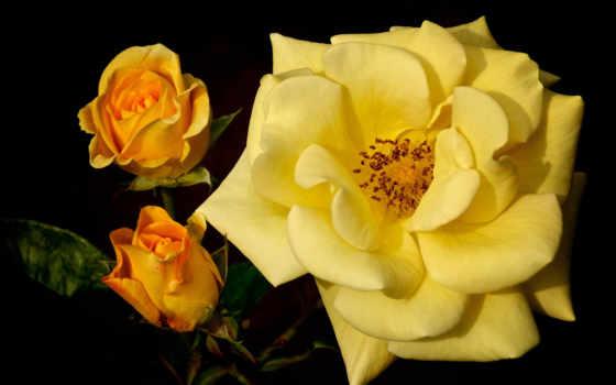 Цветы 20013