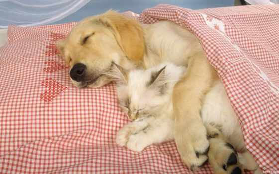спят, тюлень, котенок
