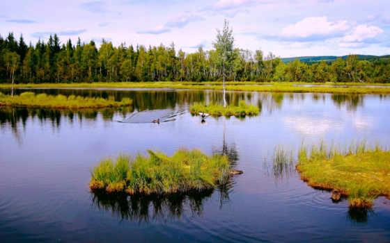 природа, деревя, леса