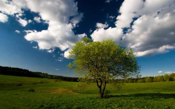 дерево, одинокое, поле