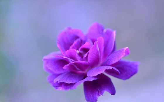 desktop, красивые, simfonija, centar, purple, color, papéis,