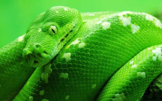 snake, зелёный, snakes