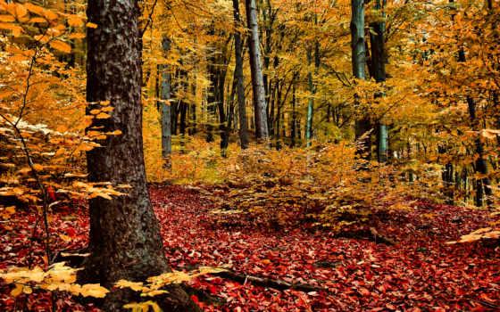 abant, top, fondos, листва, paşa, paisajes, tapety, природа, страница, татуировка,