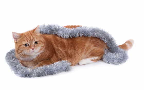 кот, red Фон № 86894 разрешение 1920x1200