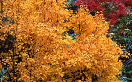 дерево, yellow, яркие