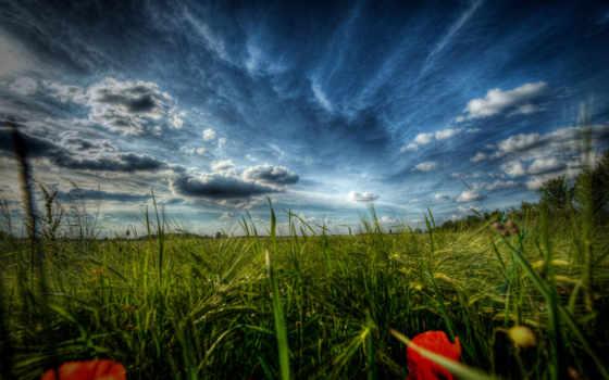 природа, поле, margin, цветы, пейзажи -, маки, трава, макро, травка,