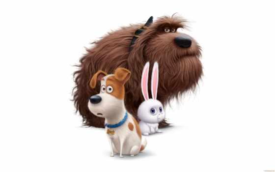 pets, secret, life, movie, подсветка, louis, untitled, об, cartoon,