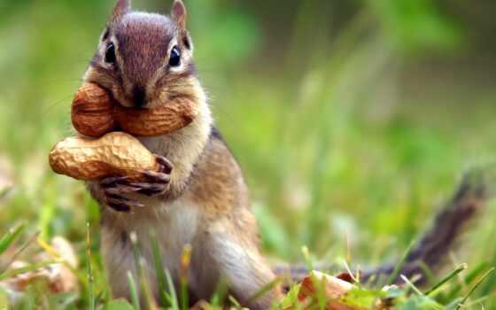 осень, animal, colorful, фото, арахис