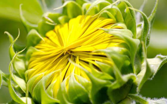 flower, free