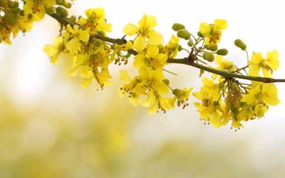 весна, цветы, branch