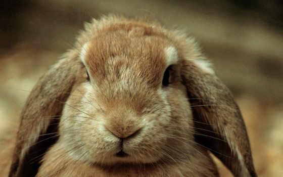 кроликов, носы, нос
