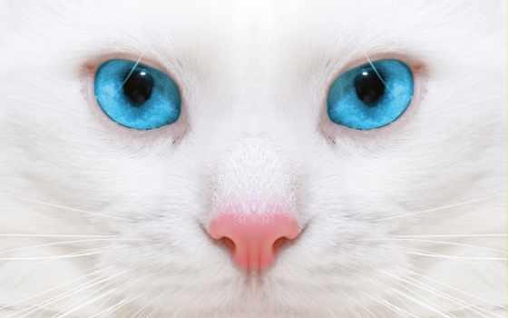 красивые, котенок, кот
