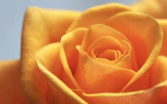 взлёт, цветы, утро, хороший, yellow