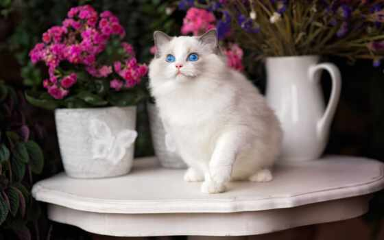 кот, white, blue, коллекция, глаз, цветы, card, папертоль, product, skotch