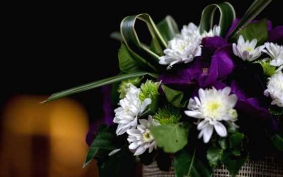 цветы, орхидеи, дек