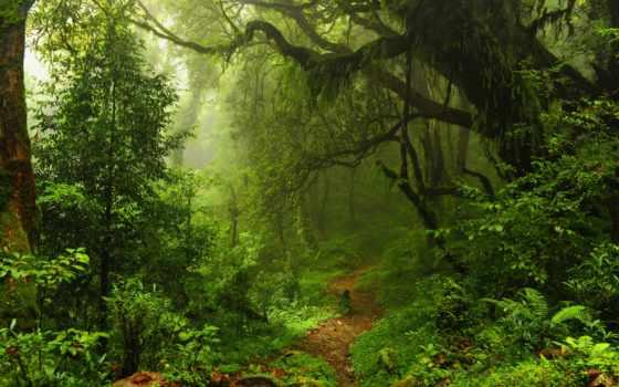 лес, деревя, природа