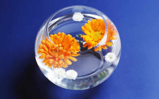 герберы, цветы, вазу, можно, вазе, сделать, agriculture, чего, круглой,