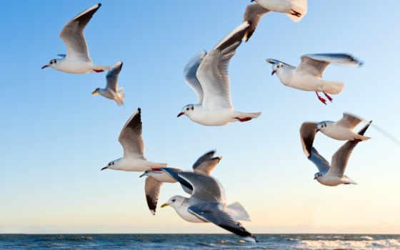 gaviotas, мар, del, gaviota, aves, lienzo, para, póster, vuelo,