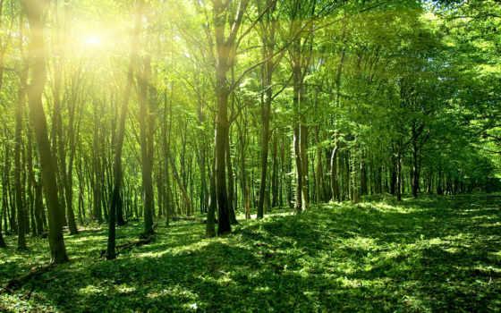 лес, india, солнца, лучах, fotohomka, aspen,