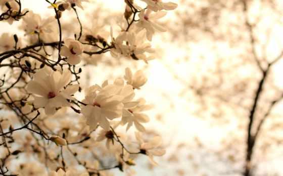 cvety, фотопанно, весенние, ванильные, sale, доставка, manufacture, модульные, фотообои, беларуси, фотообоев,