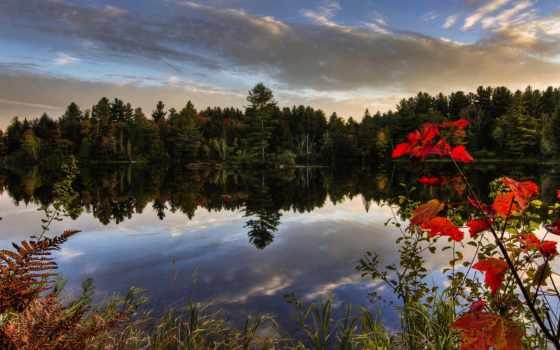 flowers, ночь, природа, река, осень, берега, красиво,