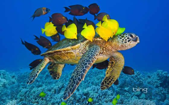 pantalla, fondos, para, descargar, fondo, gratis, tortugas, imágenes, tortuga,