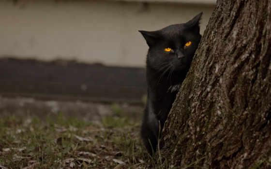 хитрая, котэ, черный, животные, песочница, зверюга, кот, укрытии, балла, котик,