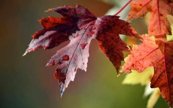 макро, листья