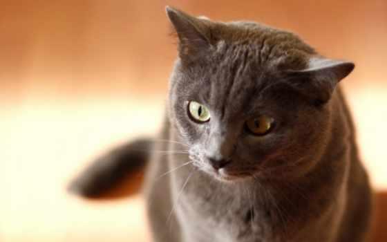 кошка, поза